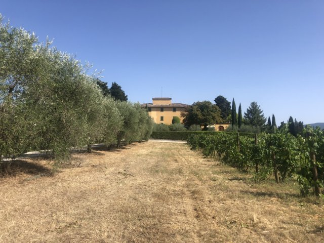 Villa Migone: filari di viti
